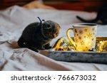 scottish fold shorthair cat on... | Shutterstock . vector #766673032