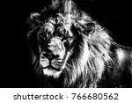 lion with a dramatic black and... | Shutterstock . vector #766680562