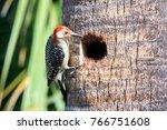 Red Bellied Woodpecker Hole