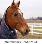 Brown Horse Face   Head Wearin...