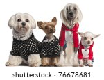 Four Dogs Dressed Up In Front...