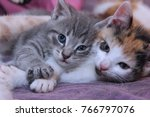 Stock photo  fluffy little kittens 766797076