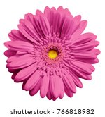 Pink Gerbera Flower  White...