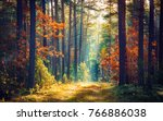 Stock photo autumn forest nature vivid morning in colorful forest with sun rays through branches of trees 766886038