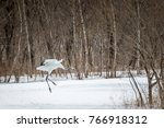 juvenile red crowned crane... | Shutterstock . vector #766918312