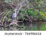 the grey heron  ardea cinerea ... | Shutterstock . vector #766986616