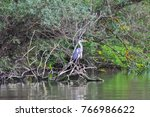 the grey heron  ardea cinerea ... | Shutterstock . vector #766986622