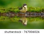 great tit  parus major  black... | Shutterstock . vector #767006026