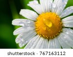 chamomile or camomile flower... | Shutterstock . vector #767163112