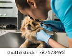 healthy dog under medical exam. ... | Shutterstock . vector #767173492