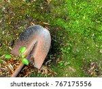 a rusty old shovel lies on... | Shutterstock . vector #767175556