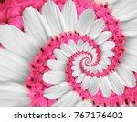 White Pink Flower Swirl Daisy...