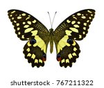 beautiful exotic colorful... | Shutterstock . vector #767211322
