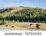 cows in a mountain meadows ... | Shutterstock . vector #767215432
