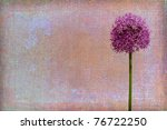 Background texture with allium blossom - stock photo