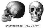vector skull from atlas...
