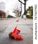 a fallen cotton tree flower... | Shutterstock . vector #767307982