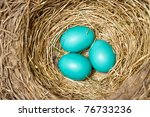 Blue Bird Eggs In A New Nest