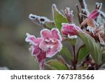 Flower With Hoarfrost On The...