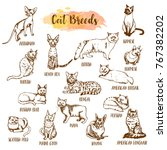 cat breed and vet care icon set....   Shutterstock .eps vector #767382202