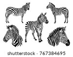 graphical set  of zebras... | Shutterstock .eps vector #767384695