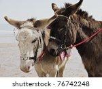 2 Beach Donkey's At Filey...