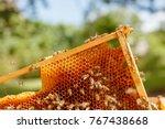 Closeup Portrait Of Beekeeper...