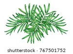 watercolor painting fern... | Shutterstock . vector #767501752