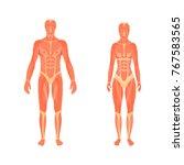 vector medical 3d illustration... | Shutterstock .eps vector #767583565