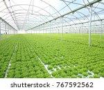 Green House For Vegetable