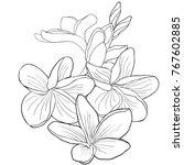 coloring of hawaiian plumeria... | Shutterstock .eps vector #767602885