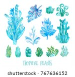 set of hand drawn tropical... | Shutterstock . vector #767636152