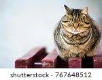 portrait of a fat striped cat...   Shutterstock . vector #767648512