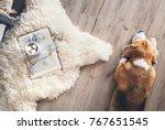 beagle lies on the laminat... | Shutterstock . vector #767651545