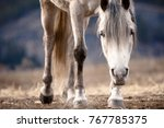 Stock photo beautiful capture of the lower half of an approaching white horse with its head lowered 767785375