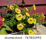 Yellow Bell Shaped Flowers Wit...
