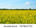Bright Yellow Canola Field...