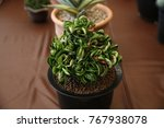 small cuctus at cafe set and... | Shutterstock . vector #767938078