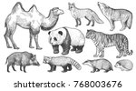 realistic animals set. camel ... | Shutterstock .eps vector #768003676