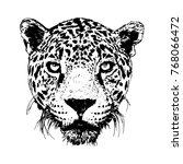 leopard head. black and white...   Shutterstock .eps vector #768066472