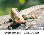 a big lizard is heating up on a ...   Shutterstock . vector #768109405