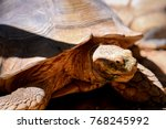 Giant African Spurred Tortoise...