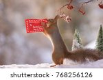 Red Squirrel Holding A...