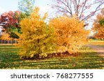 beautiful autumn leaves with... | Shutterstock . vector #768277555