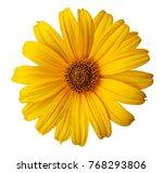 yellow daisy flower on a white... | Shutterstock . vector #768293806