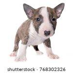miniature bull terrier in front ...   Shutterstock . vector #768302326