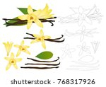 vanilla planifolia flower and... | Shutterstock .eps vector #768317926