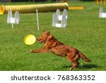 agility jumping dog... | Shutterstock . vector #768363352
