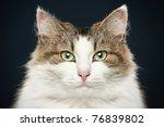 forest cat. close up portrait... | Shutterstock . vector #76839802