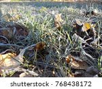 frost on  grass and on leaves | Shutterstock . vector #768438172